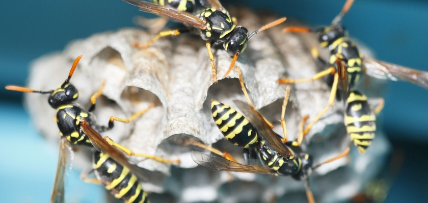 Wasp problems contact a BPCA member today